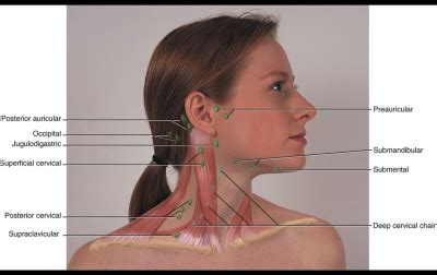 Head, Face, & Neck (Lymph Nodes) at Simmons College