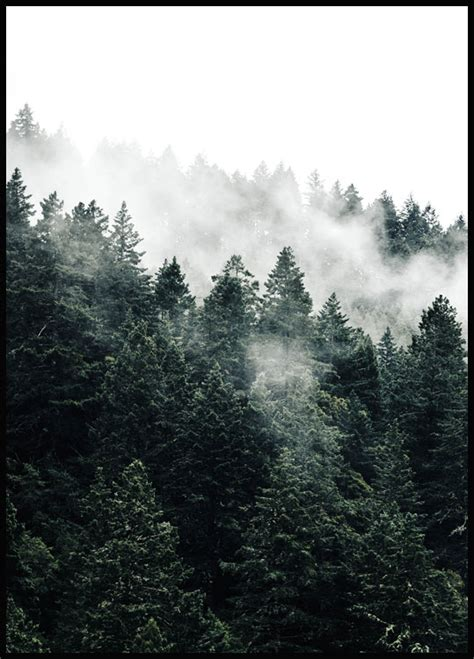 Nature Poster - Misty Forest Poster - Posters online