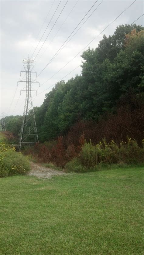 Ask a Reporter: Duke Energy uses EPA-approved weed sprays