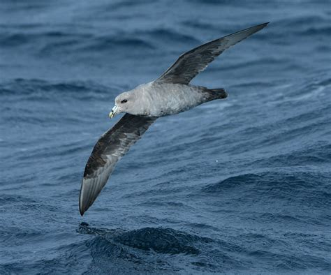 Watching the Sun Bake: Seabird Observations from a