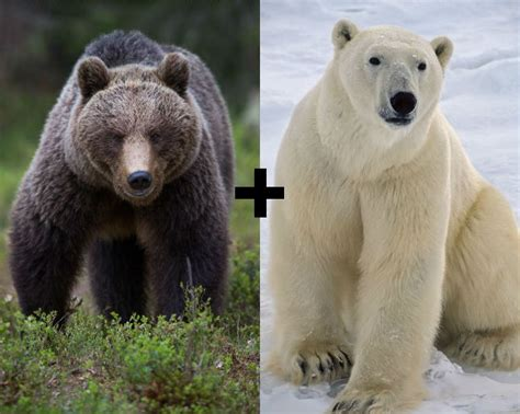 10 Incredible Hybrid Animals You Wouldn't Believe Exist